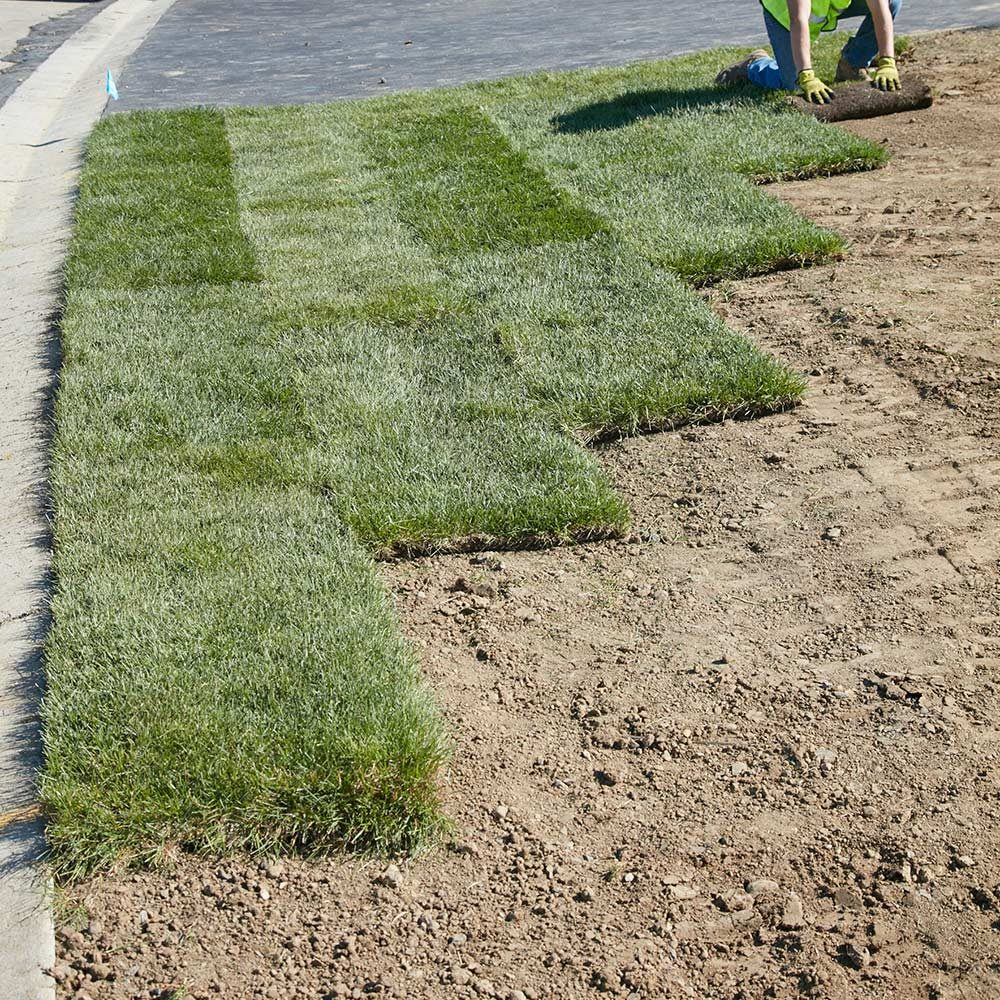Achieve A Gorgeous Green Lawn Learn How To Lay Sod The