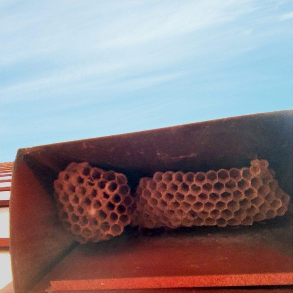 Hornets nest in vent