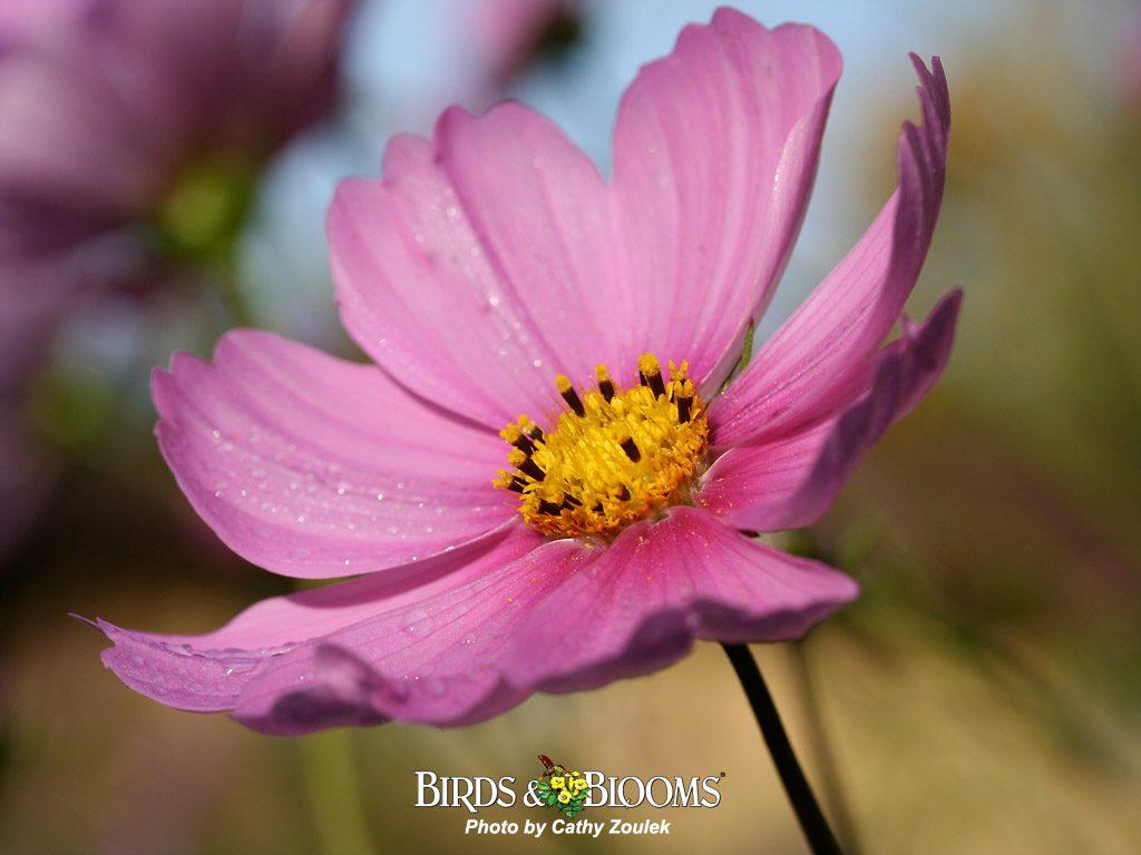 flowers devine wallpaper - photo #47