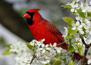 Birds and Blooms: A Perfect Pair