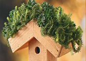 Green-Roof Birdhouse