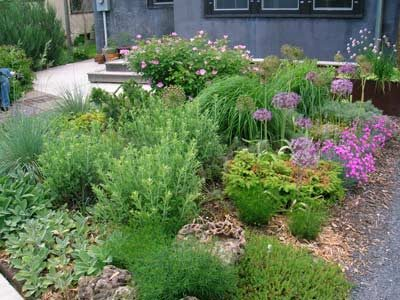 Xeriscaping: Early summer