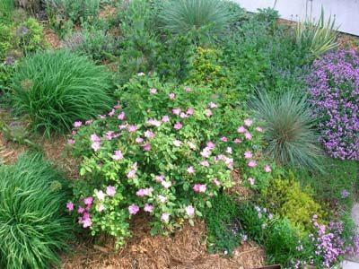 A xeriscape garden