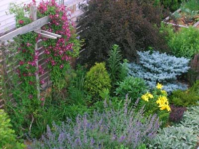 Shrubs and trees that require minimal pruning