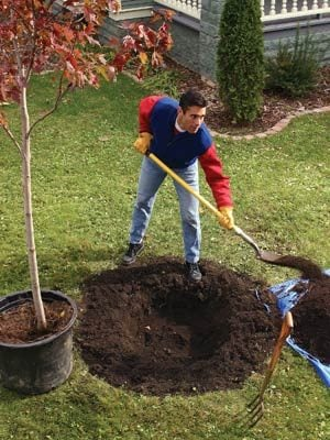 Planting a potted tree