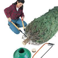 How to Keep a Christmas Tree Alive