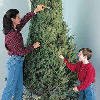 Cut a Tree to Keep it Fresh Longer