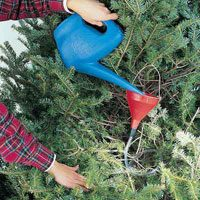 Use a Funnel to Water Your Christmas Tree