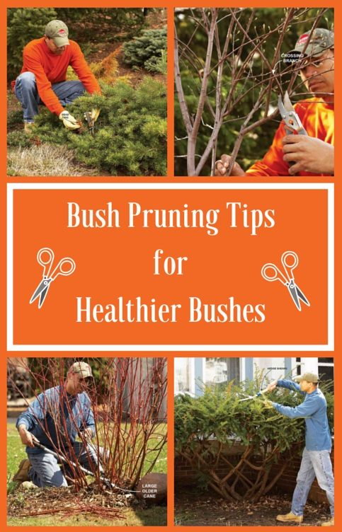 Bush Pruning Tips For Healthier Bushes The Family Handyman