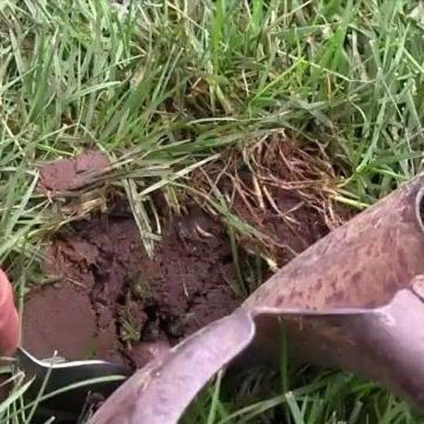 How to correct soil ph the family handyman for Utility of soil