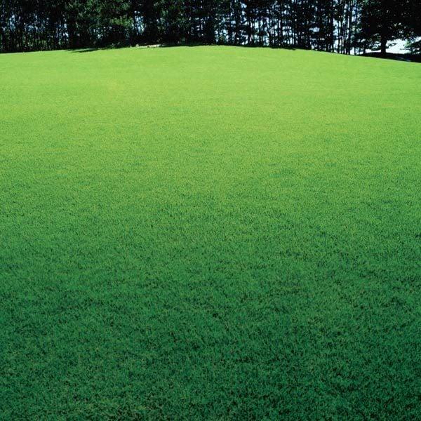 Kẻ vạch một bãi cỏ có thể tạo ra một hiệu ứng ấn tượng