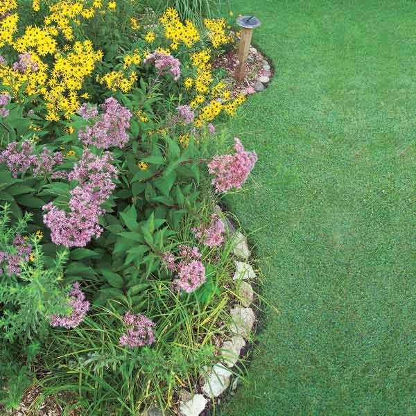 How To Build A Rain Garden In Your Yard The Family Handyman
