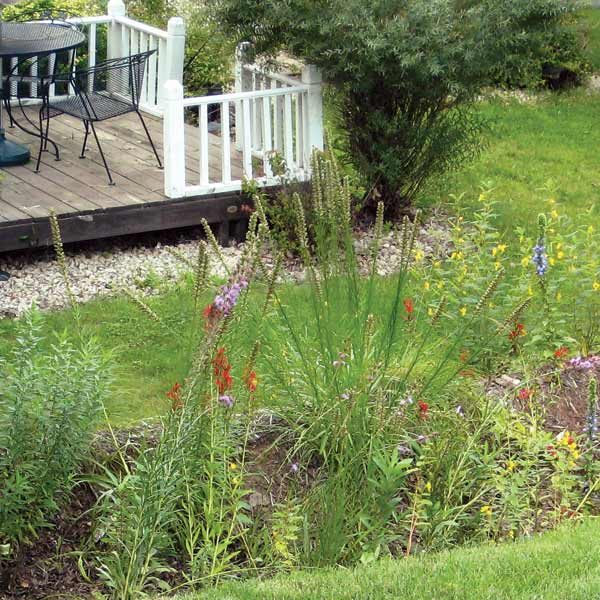 6 Common Lawn Problems And How To Fix Them The Family