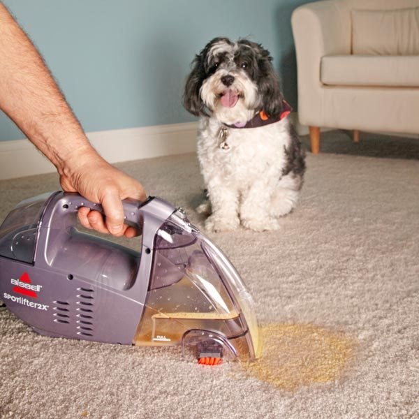 Diy Carpet Cleaner For Pets: Eliminate Pet Stains And Odors Quickly After The Accident