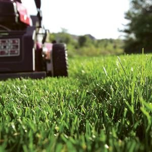Easy Lawn Care Tips
