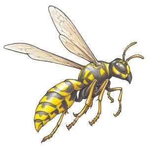Get Rid of Wasps, Woodpeckers and Flies
