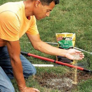 Fixing Dead Spots in Your Lawn