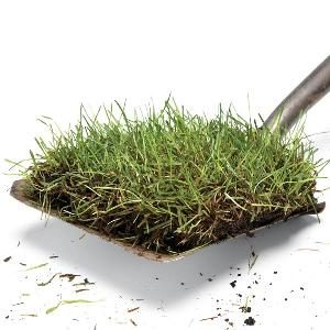 Growing Lawn Grass: The Organic Approach