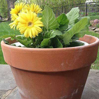 Nifty Nimbus Self-Watering Pot