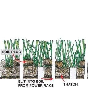 Figure A: Revitalized lawn