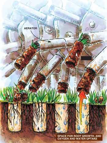 Lawn plug illustration