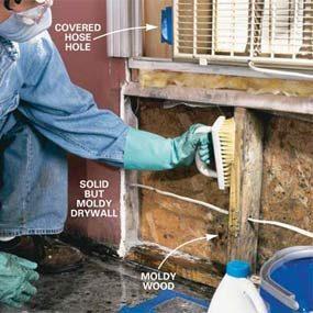 Photo 6: Scrub moldy surfaces