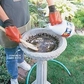 This photo shows how to clean a bird bath.