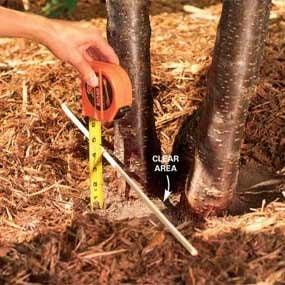 Ideal mulch depth