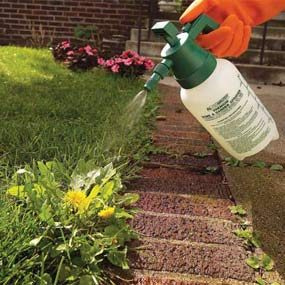 A small pressure sprayer handles the isolated weed invader.