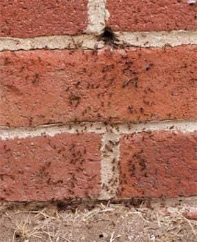 Check grout lines and cracks