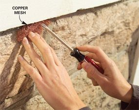 Photo 6: Plug gaps with mesh
