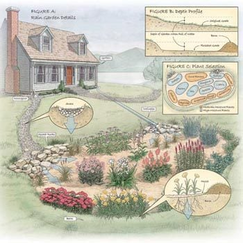 How to Build a Rain Garden in Your Yard Family Handyman