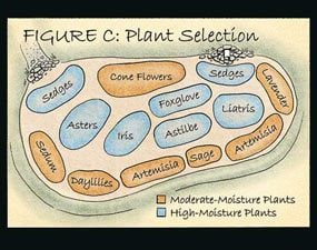Figure C: plant selection