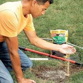 Fixing Dead Spots in Your Lawn