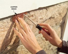 Use copper scrubbing pads to fill gaps