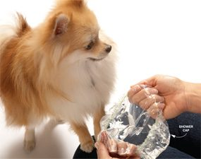 Use a shower cap as a portable water bowl