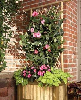 Bamboo planter and trellis on a patio