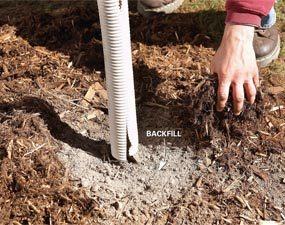 Surround the tree with mulch
