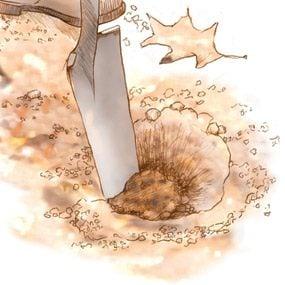 Slice through the topsoil