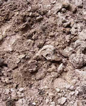 Soil before amending