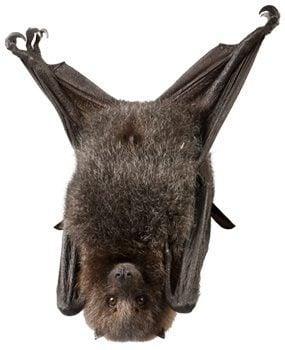 Control bats