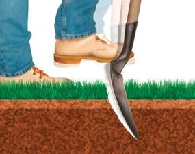 How to Grow Greener Grass