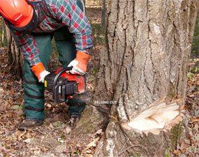 Make the felling cut
