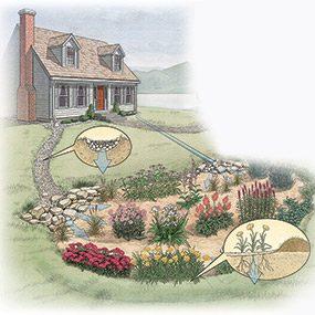 Build a Rain Garden