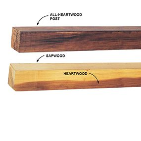 Heartwood and sapwood shown in two cedar fence posts.