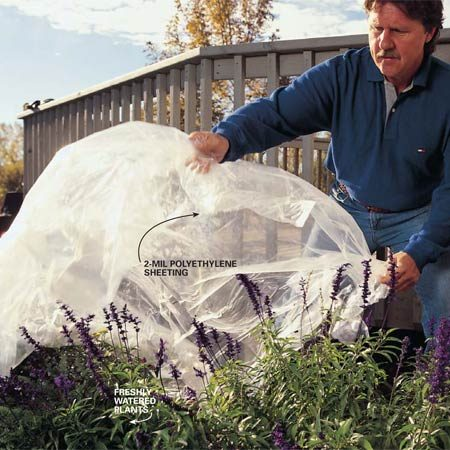 <b>Photo 2: Protect your plants</b></br> Cover your plants with plastic sheets once you've soaked them with water. Most strippers and deck cleaners won't ruin your plants but can subject them to unnecessary stress.
