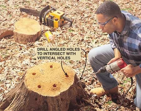 <b>Drill holes in the stump</b></br> Cut off as much of the top of the stump as possible. Using a 1-in. spade bit with a spade bit extension, drill 1-in. holes around the perimeter of the stump about 12 in. deep and 3 to 4 in. back from the edge. Drill more holes 3 to 4 in. down from the rim at a 45-degree angle to connect with the other holes. They'll provide vent holes for burning or help the rotting process.