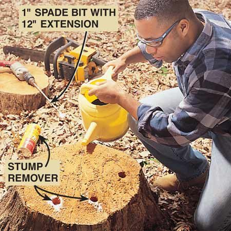 <b>Pour stump remover in the holes</b></br> Pour 3 to 4 oz. of stump remover chemical into each of the holes and fill them with water. The process takes four to six weeks.