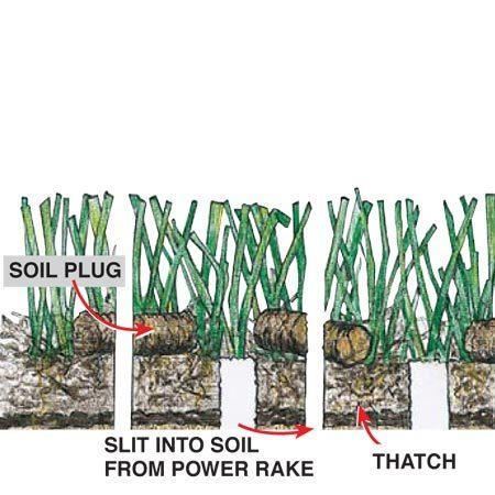 Figure A: Revitalize your lawn