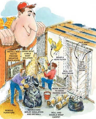 How to handle moldy building materials